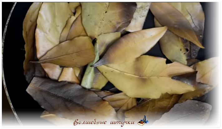 Магия лавровых листьев